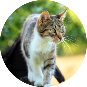 Cat Transport international and domestic pet movers nz - Cats - VenturePet Home