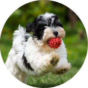 Dog Transport international and domestic pet movers nz - Dogs - VenturePet Home