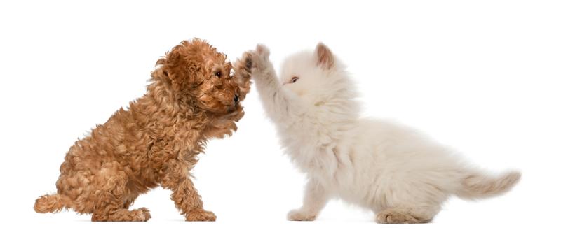 Successful pet transfers pet travel testimonials - Job Well done - Testimonials